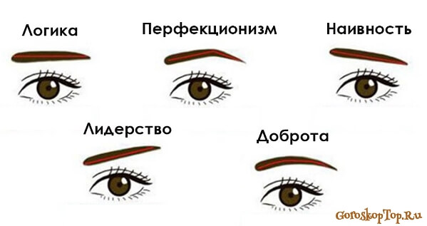 Брови - Физиогномика - гадание по лицу